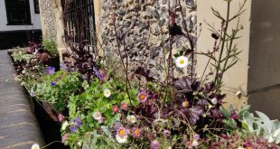 St Albans City Centre Pollinator Project